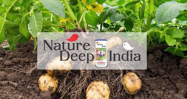sumitomo naturedeep for potato crop mobile banner