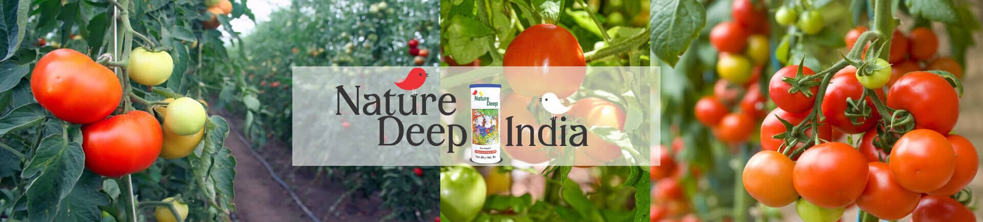 sumitomo naturedeep for tomato crop desktop banner