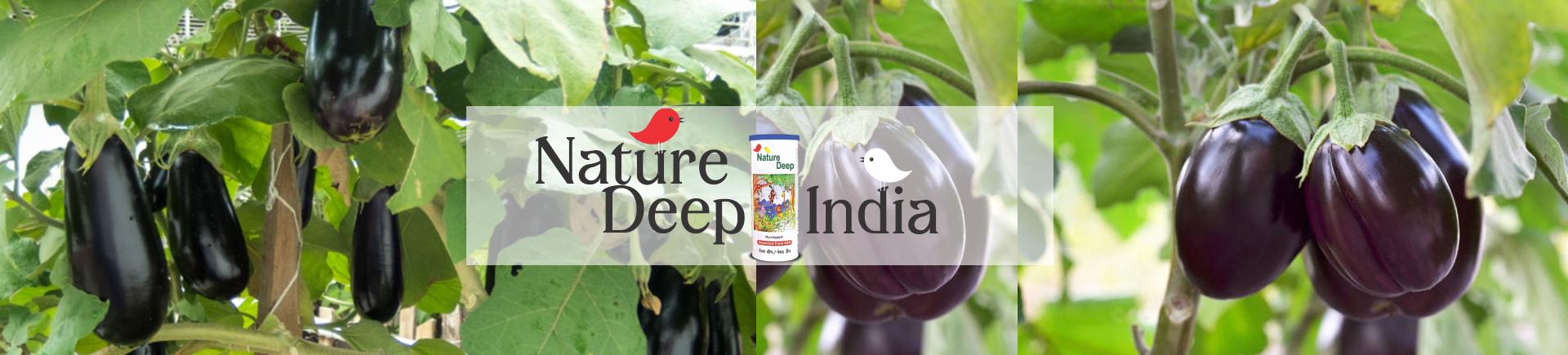 naturedeep in Eggplant crop desktop