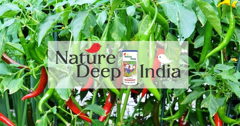 sumitomo naturedeep for chilli crop mobile banner