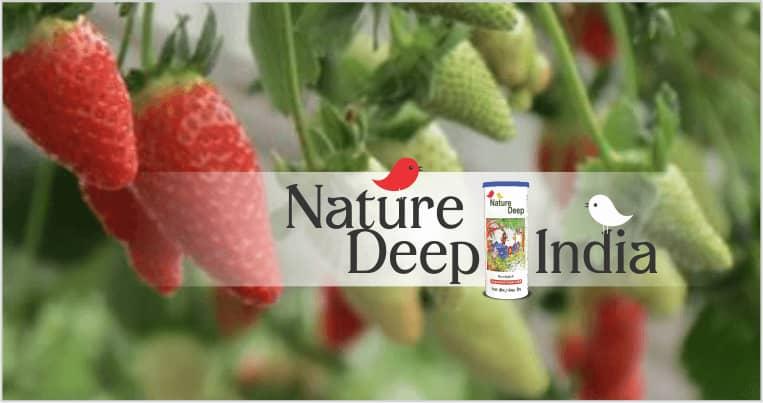 sumitomo naturedeep for strawberry crop mobile banner