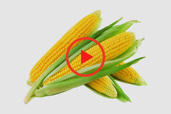sumitomo naturedeep for corn crop