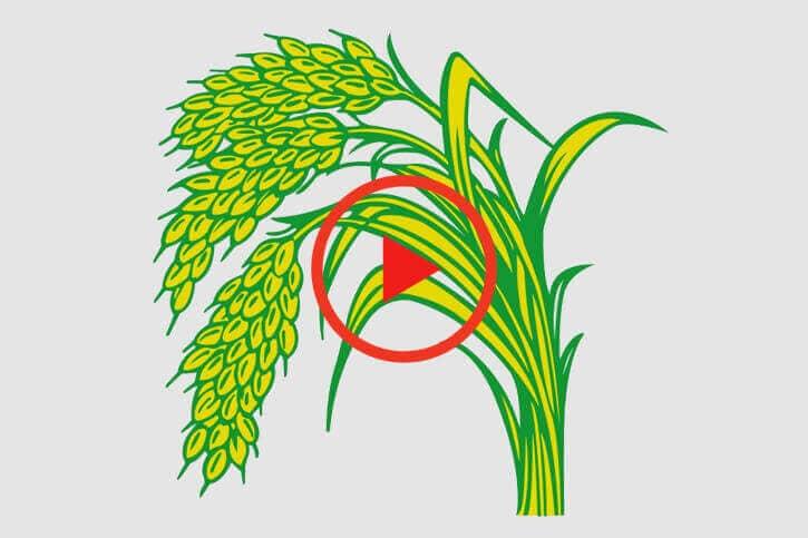 sumitomo naturedeep for paddy crop